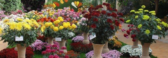 Flori de toamna_Editia XXXIX (2015)