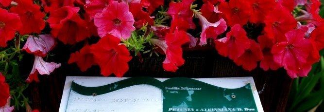 Prezentare plante pentru nevazatori