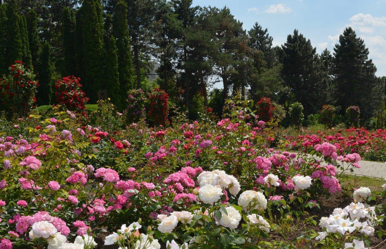 """Anastasie Fătu"""" Botanical Garden - Universitatea """"Alexandru Ioan ..."""