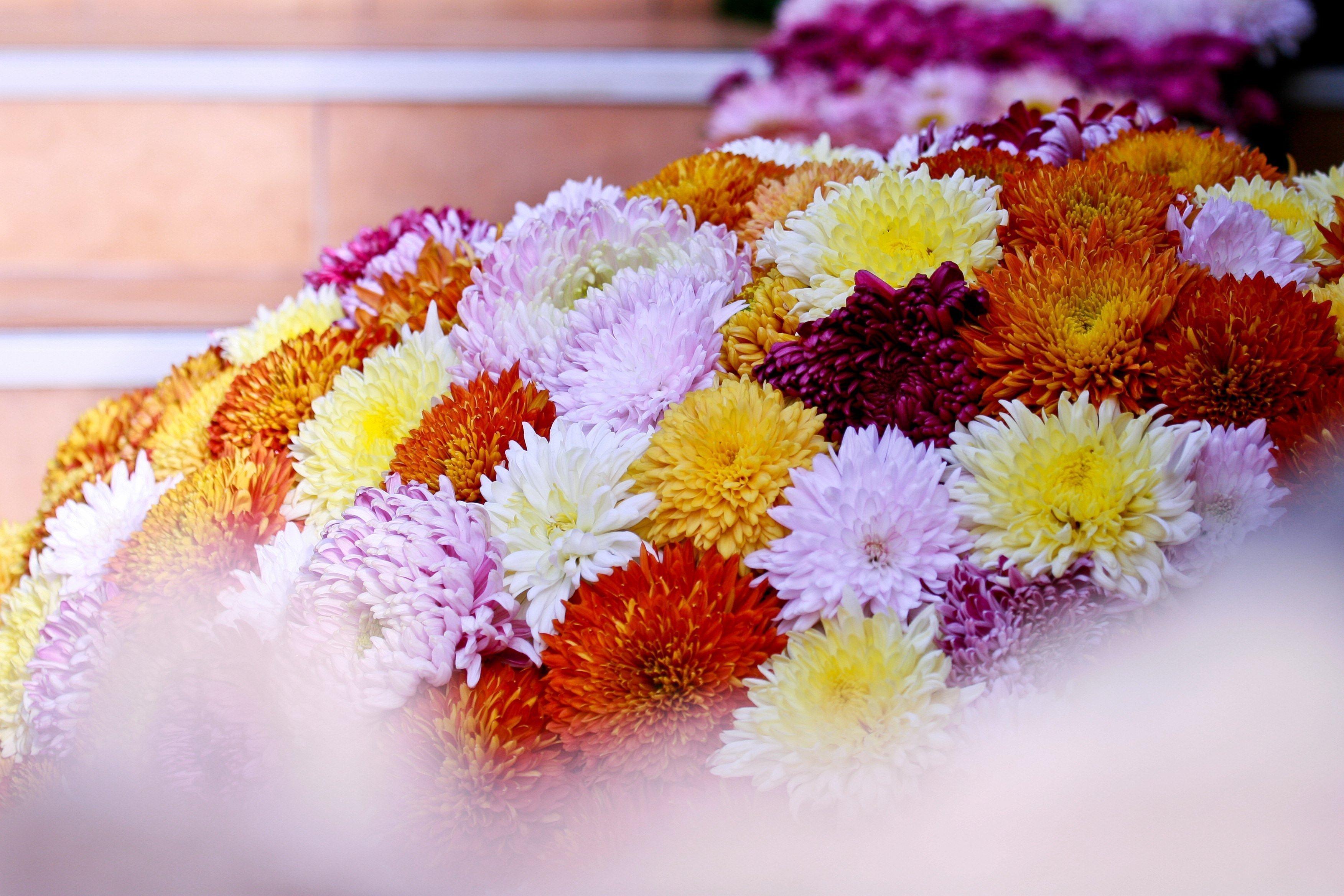 Expoziţia Flori de Toamnă